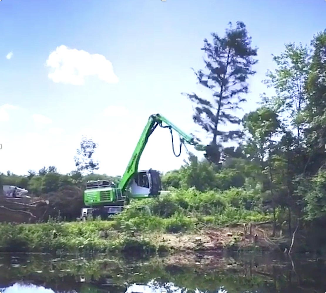 718e cutting trees near wetland edges